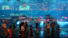 Dubai Aquarium and underwater zoo inside of the Dubai Mall Stock Footage