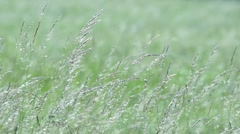 Wild grasses - stock footage