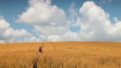 Woman in wheat field - stock footage