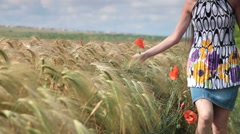 woman with poppies in a wheat field - stock footage