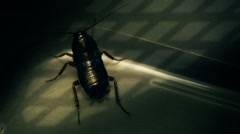 Cockroach in Pipe Moves Away FULL HD Stock Footage