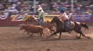 Stock Video Footage of Steer Ropers