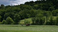 Amish farmer working in field with team of hourses Stock Footage