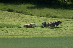 Amish farmer cutting hay with horses and equipment Stock Footage