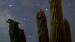 Cactus starlapse baja california sur desert Stock Footage
