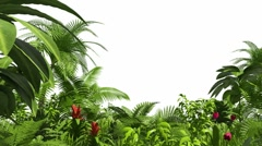 Growing tropical forest - stock footage