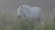 Stock Video Footage of Horses