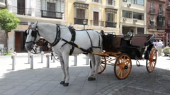 Horse carriage fast timelapse P HD 9792 Stock Footage