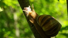 Snail creeps on a tree - timelapse Stock Footage