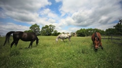 Horses Grazing - Animals Feeding on Beautiful Colorful Farm - stock footage