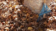 Stock Video Footage of Pan Up of Autumn Leaves in Bag with Rake