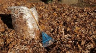 Stock Video Footage of Pan of Autumn Leaves in Bag with Rake