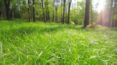 Shallow DOF, lush green grass forrest fly 1 - stock footage
