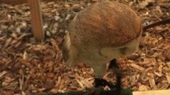 bird of prey - stock footage