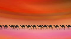CAMELS ON DESERT Stock Footage