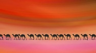 Stock Video Footage of CAMELS ON DESERT