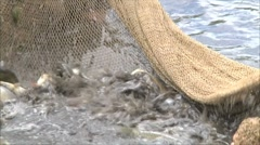 Fish in the nets of fishermen 2 Stock Footage