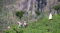 Tea pickers in the fields in Sri Lanka - stock footage