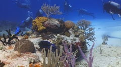 Coral,fish and divers Stock Footage
