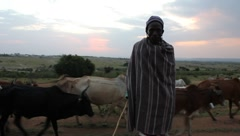 Maasai man with Cows Behind and Little Boy (HD) Stock Footage