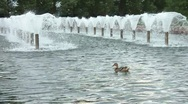 Stock Video Footage of Duck In The Fountain