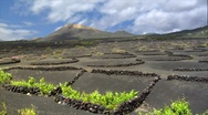 Stock Video Footage of la geria volcanic wine growing region