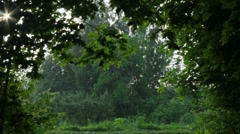 Raining in the summer forest alley Stock Footage