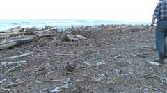 Driftwood littered beach Stock Footage