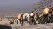 Stock Video Footage of Rural India, donkeys walking on stairs, traditional society
