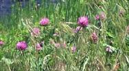 Wild flowers in wind Stock Footage