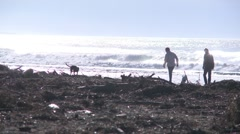 People walk dogs on log littered  beach Stock Footage