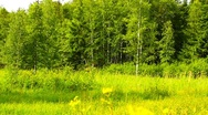 Stock Video Footage of Forest And Field Beauty Scene 03 ARTCOLORED
