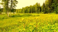 Stock Video Footage of Forest and Field Beauty Scene 04 ARTCOLORED