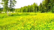 Stock Video Footage of Forest And Field Beauty Scene 05 ARTCOLORED