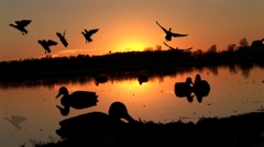 Duck Hunting Sunrise Stock Footage
