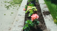 Planting a flowerbed. - stock footage