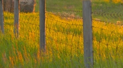 Agriculture, farm field and fence at Sunset, light breeze, nice color Stock Footage