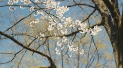 Spring has arrived. Stock Footage