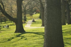 Sunny park. SD. Stock Footage