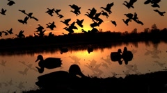 Duck Hunting Sunrise - stock footage