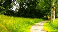 Path in Nature 14 ARTCOLORED Stock Footage