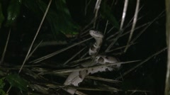 Copperhead7 - Closeup - Zoomed - 1080p Stock Footage