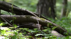 Tree root Stock Footage
