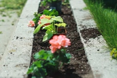 Planting a flowerbed. SD. Stock Footage