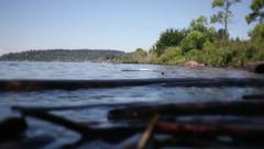 Logs on water floating. Ecology. Dolly shot Stock Footage