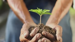 Hands holding new growth - stock footage