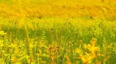 Stock Video Footage of Summer Field Beauty Scene 02 ARTCOLORED