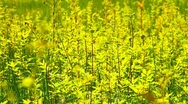 Stock Video Footage of Summer Field Beauty Scene 05 ARTCOLORED