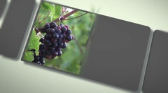 Montage about wine topic Stock Footage