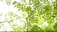 Bright tree leaves against blurred sky and leafage - stock footage